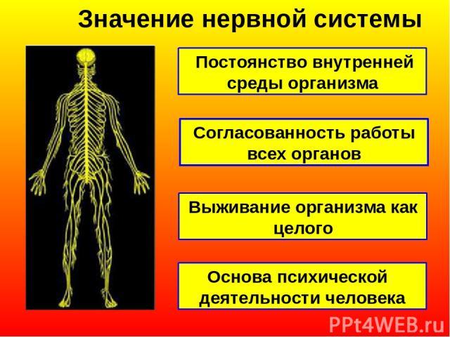 Значение нервной системы Постоянство внутренней среды организма Согласованность работы всех органов Выживание организма как целого Основа психической деятельности человека
