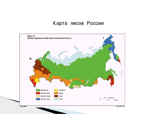 Карта лесов России