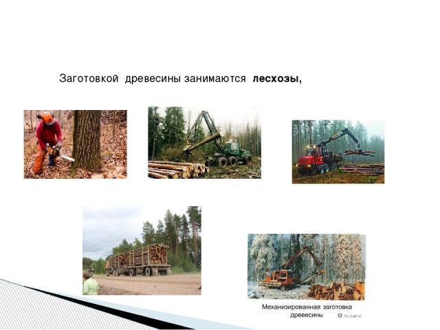 Заготовкой древесины занимаются лесхозы,