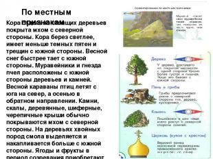 По местным признакам Кора отдельно стоящих деревьев покрыта мхом с северной стор