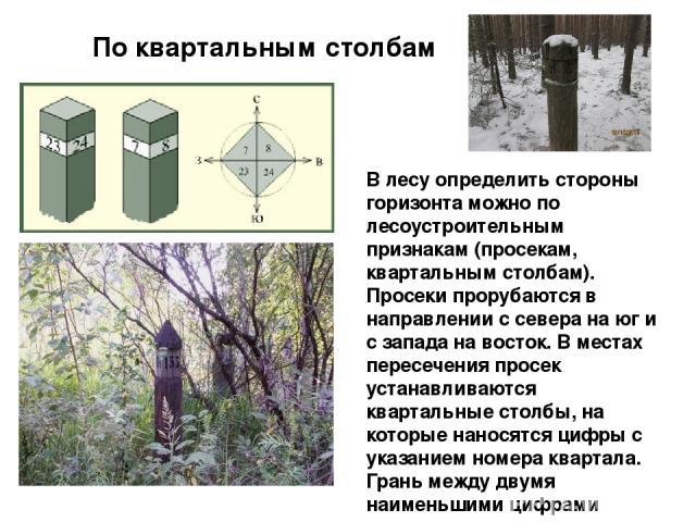 По квартальным столбам В лесуопределить стороны горизонта можно по лесоустроительным признакам (просекам, квартальным столбам). Просеки прорубаются в направлении с севера на юг и с запада на восток. В местах пересечения просек устанавливаются кварт…