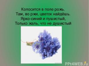 Колосится в поле рожь. Там, во ржи, цветок найдёшь. Ярко-синий и пушистый, Тольк