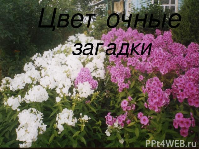 цветочные загадки Цветочные загадки
