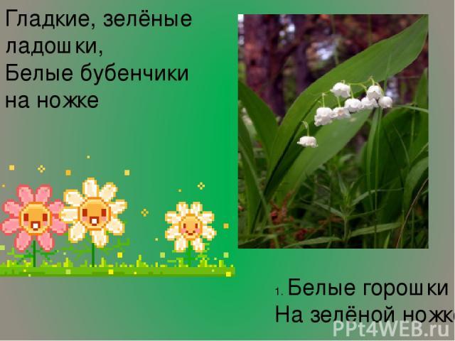1. Белые горошки На зелёной ножке. Гладкие, зелёные ладошки, Белые бубенчики на ножке