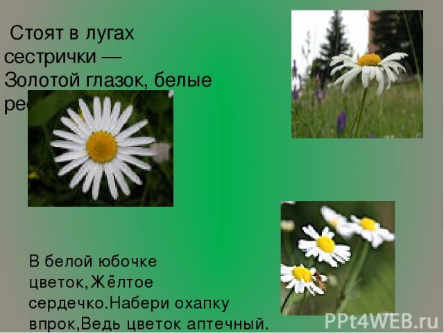 Стоят в лугах сестрички — Золотой глазок, белые реснички В белой юбочке цветок,Жёлтое сердечко.Набери охапку впрок,Ведь цветок аптечный.