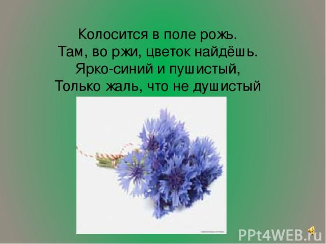 Колосится в поле рожь. Там, во ржи, цветок найдёшь. Ярко-синий и пушистый, Только жаль, что не душистый