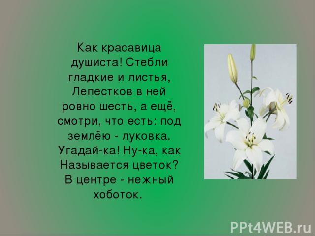 Как красавица душиста! Стебли гладкие и листья, Лепестков в ней ровно шесть, а ещё, смотри, что есть: под землёю - луковка. Угадай-ка! Ну-ка, как Называется цветок? В центре - нежный хоботок.