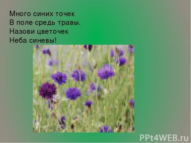 Много синих точек В поле средь травы. Назови цветочек Неба синевы!