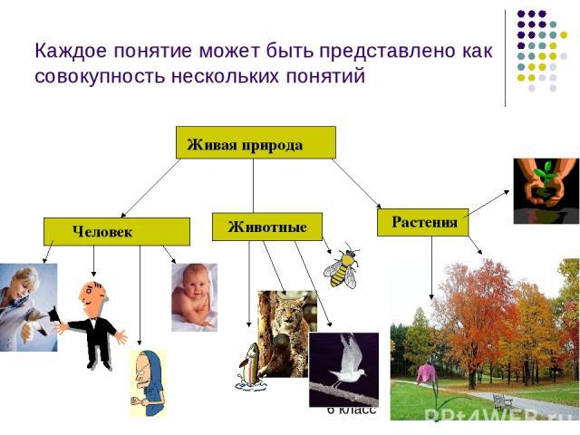 Каждое понятие может быть представлено как совокупность нескольких понятий Живая природа Человек Животные Растения 6 класс