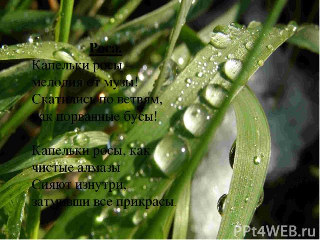 Роса. Капельки росы – мелодия от музы! Скатились по ветвям, как порванные бусы! Капельки росы, как чистые алмазы Сияют изнутри, затмивши все прикрасы.