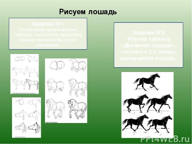 Рисуем лошадь Задание №1 -Рассмотрев предложенные таблицы, выполнить зарисовку лошади приемом быстрого рисования. Задание №2 -Изучив таблицу «Движение лошади», составьте 2-3 схемы, движущейся лошадь.