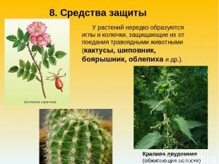 У растений нередко образуются иглы и колючки, защищающие их от поедания травоядн