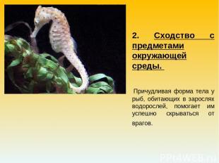 2. Сходство с предметами окружающей среды. Причудливая форма тела у рыб, обитающ
