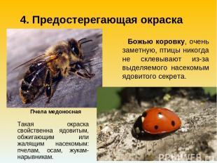 Такая окраска свойственна ядовитым, обжигающим или жалящим насекомым: пчелам, ос