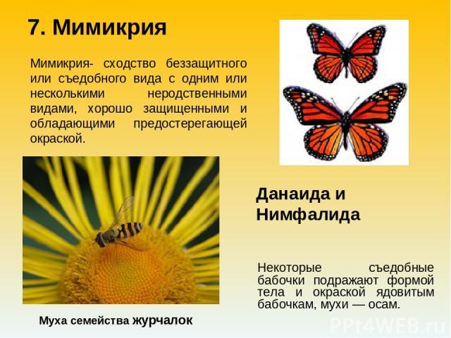 Некоторые съедобные бабочки подражают формой тела и окраской ядовитым бабочкам, мухи — осам. Муха семейства журчалок Мимикрия- сходство беззащитного или съедобного вида с одним или несколькими неродственными видами, хорошо защищенными и обладающими …