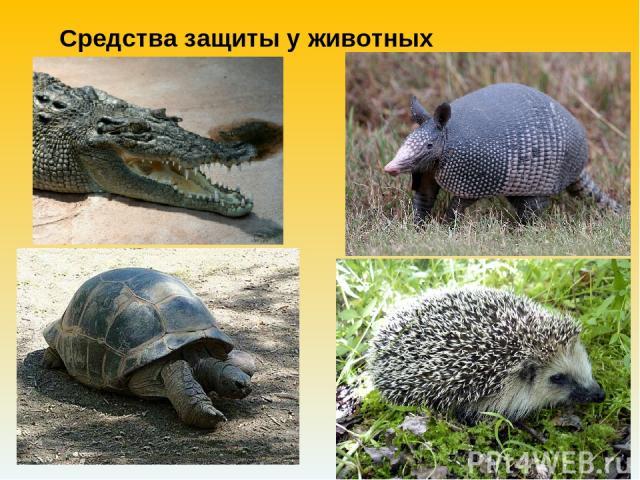 Средства защиты у животных
