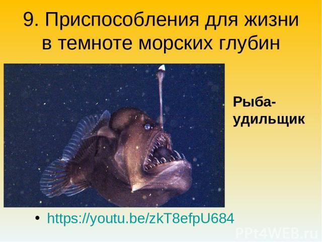 9. Приспособления для жизни в темноте морских глубин https://youtu.be/zkT8efpU684 Рыба-удильщик