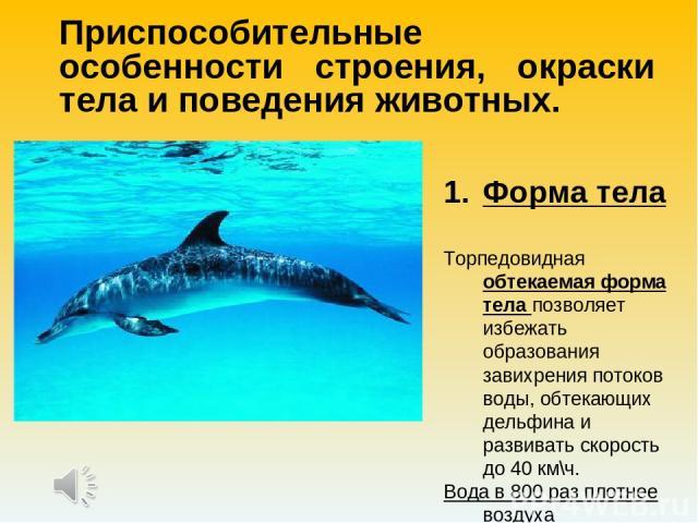 Приспособительные особенности строения, окраски тела и поведения животных. Форма тела Торпедовидная обтекаемая форма тела позволяет избежать образования завихрения потоков воды, обтекающих дельфина и развивать скорость до 40 км\ч. Вода в 800 раз пло…