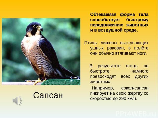 Обтекаемая форма тела способствует быстрому передвижению животных и в воздушной среде. Птицы лишены выступающих ушных раковин, в полёте они обычно втягивают ноги. В результате птицы по быстроте намного превосходят всех других животных. Например, сок…