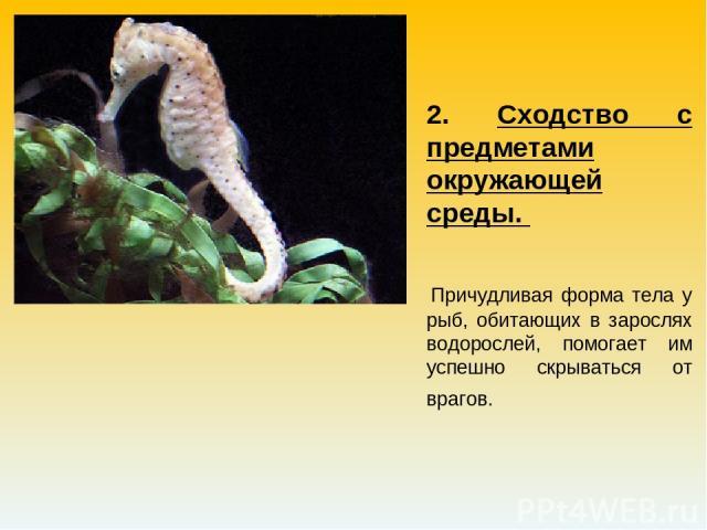 2. Сходство с предметами окружающей среды. Причудливая форма тела у рыб, обитающих в зарослях водорослей, помогает им успешно скрываться от врагов.