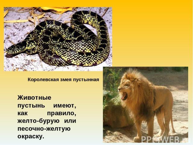 Животные пустынь имеют, как правило, желто-бурую или песочно-желтую окраску. Королевская змея пустынная
