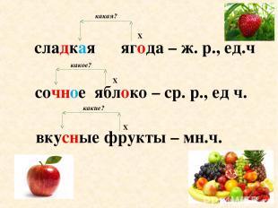 сладкая ягода – ж. р., ед.ч сочное яблоко – ср. р., ед ч. вкусные фрукты –