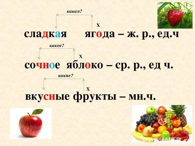 сладкая ягода – ж. р., ед.ч сочное яблоко – ср. р., ед ч. вкусные фрукты – мн.ч. Х Х Х какая? какое? какие?