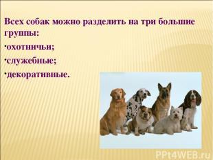 Всех собак можно разделить на три большие группы: охотничьи; служебные; декорати