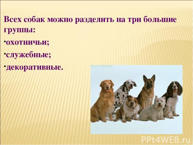 Всех собак можно разделить на три большие группы: охотничьи; служебные; декоративные.