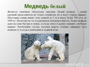 Медведь белый Является типичным обитателем Арктики. Белый медведь – самый крупны