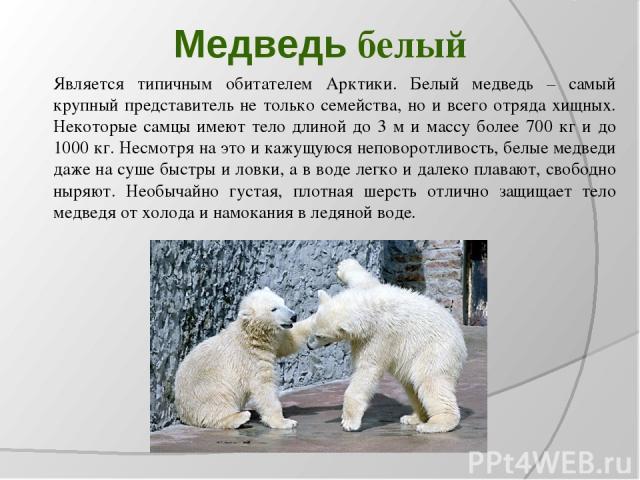 Медведь белый Является типичным обитателем Арктики. Белый медведь – самый крупный представитель не только семейства, но и всего отряда хищных. Некоторые самцы имеют тело длиной до 3 м и массу более 700 кг и до 1000 кг. Несмотря на это и кажущуюся не…