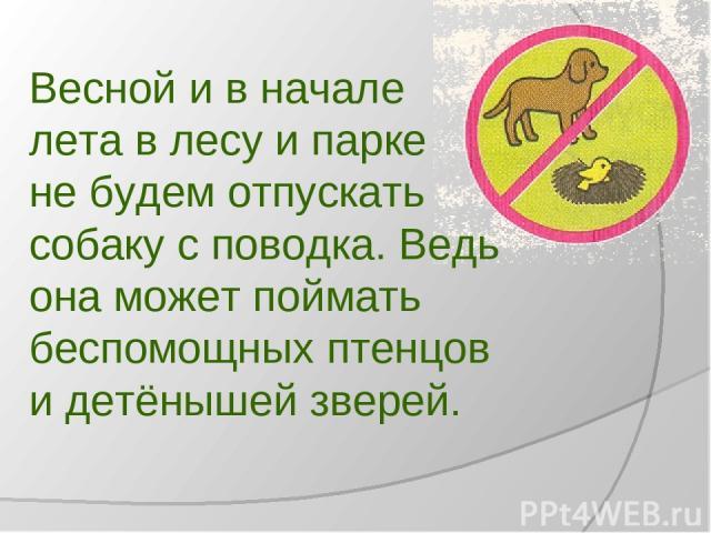 Весной и в начале лета в лесу и парке не будем отпускать собаку с поводка. Ведь она может поймать беспомощных птенцов и детёнышей зверей.
