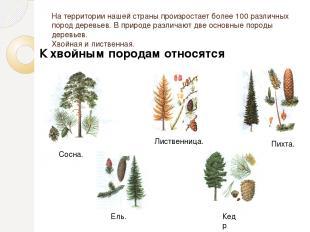 На территории нашей страны произростает более 100 различных пород деревьев. В пр