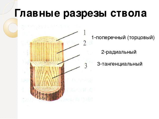 Мягкая (осина, липа, сосна) Твёрдая( дуб, берёза) Очень твёрдая (белая акация, тис, лиственница) По трудности обработки