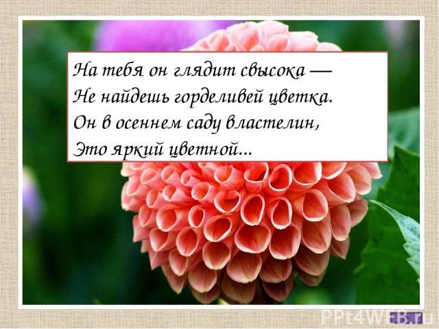 На тебя он глядит свысока — Не найдешь горделивей цветка. Он в осеннем саду властелин, Это яркий цветной...