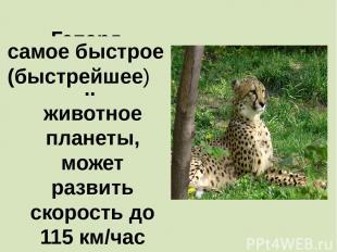 Гепард - ………………….. животное планеты, может развить скорость до 115 км/час самое
