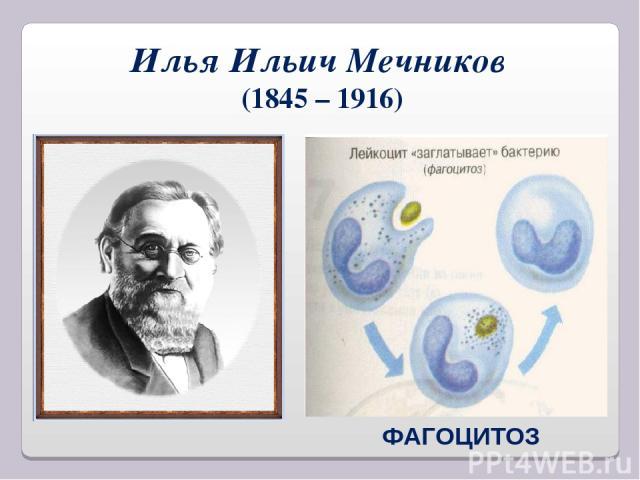 Илья Ильич Мечников (1845 – 1916) ФАГОЦИТОЗ