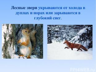 Лесные звери укрываются от холода в дуплах и норах или зарываются в глубокий сне