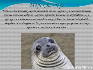 Морской зверь В дальневосточных морях обитает много морских млекопитающих: киты,