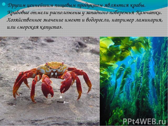 Другим ценнейшим пищевым продуктом являются крабы. Крабовые отмели расположены у западного побережья Камчатки. Хозяйственное значение имеют и водоросли, например ламинария, или «морская капуста».
