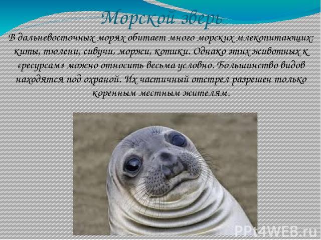 Морской зверь В дальневосточных морях обитает много морских млекопитающих: киты, тюлени, сивучи, моржи, котики. Однако этих животных к «ресурсам» можно относить весьма условно. Большинство видов находятся под охраной. Их частичный отстрел разрешен т…