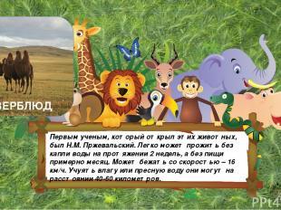Первым ученым, который открыл этих животных, был Н.М. Пржевальский. Легко может