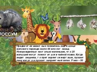 Предки этих животных появились еще в конце мелового периода около 66 млн лет наз