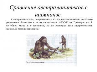 Сравнение австралопитеков с шимпанзе. У австралопитеков , по сравнению с их пред