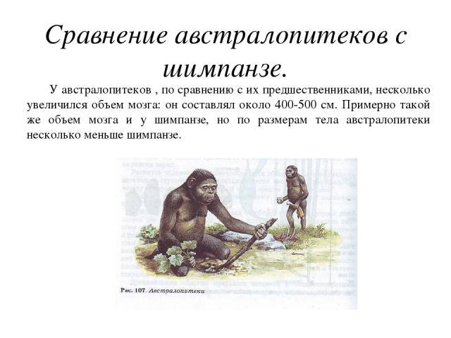 Сравнение австралопитеков с шимпанзе. У австралопитеков , по сравнению с их предшественниками, несколько увеличился объем мозга: он составлял около 400-500 см. Примерно такой же объем мозга и у шимпанзе, но по размерам тела австралопитеки несколько …