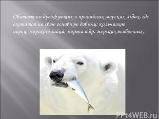 Обитает на дрейфующих и припайных морских льдах, где охотится на свою основную д