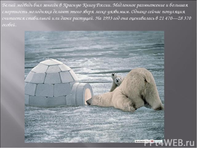 Белый медведь был занесён вКрасную Книгу России. Медленное размножение и большая смертность молодняка делают этого зверя легко уязвимым. Однако сейчас популяция считается стабильной или даже растущей. На1993 год она оценивалась в 21 470—28 370 особей.