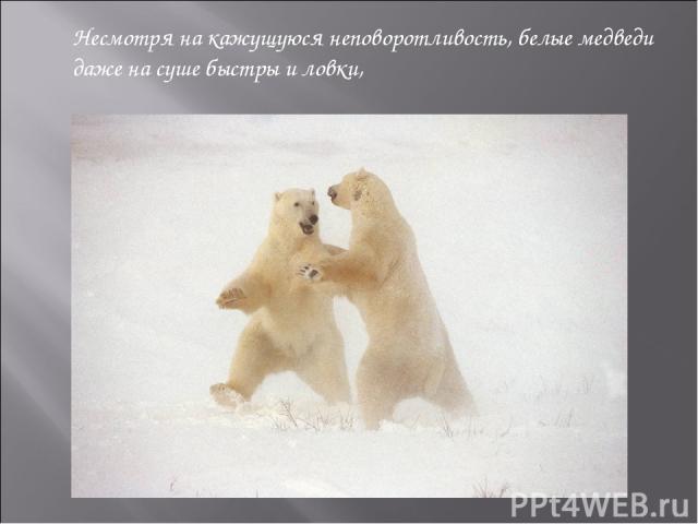 Несмотря на кажущуюся неповоротливость, белые медведи даже на суше быстры и ловки, а в воде легко плавают и ныряют. Очень густая, плотная шерсть защищает тело медведя от холода и намокания в ледяной воде. Несмотря на кажущуюся неповоротливость, бел…