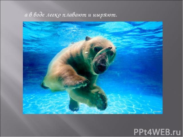 а в воде легко плавают и ныряют.