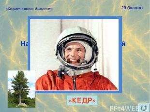 «Космическая» биология 20 баллов Назовите «хвойный» позывной Юрия Гагарина. «КЕД